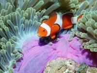 Фото 97. Обои для рабочего стола: обои с подводным миром