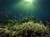 Фото 98. Обои для рабочего стола: обои с подводным миром