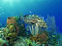 Фото 99. Обои для рабочего стола: обои с подводным миром