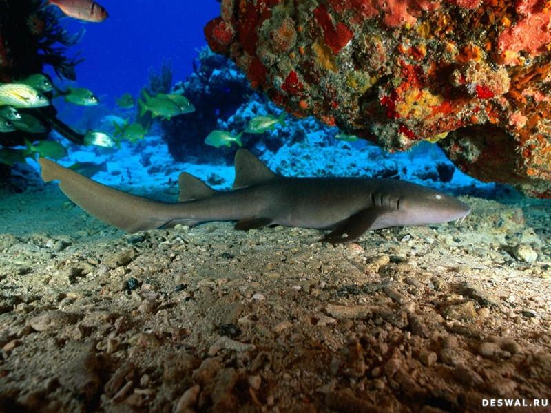 Фото 4. Нажмите на картинку с обоями подводного мира, чтобы просмотреть ее в реальном размере