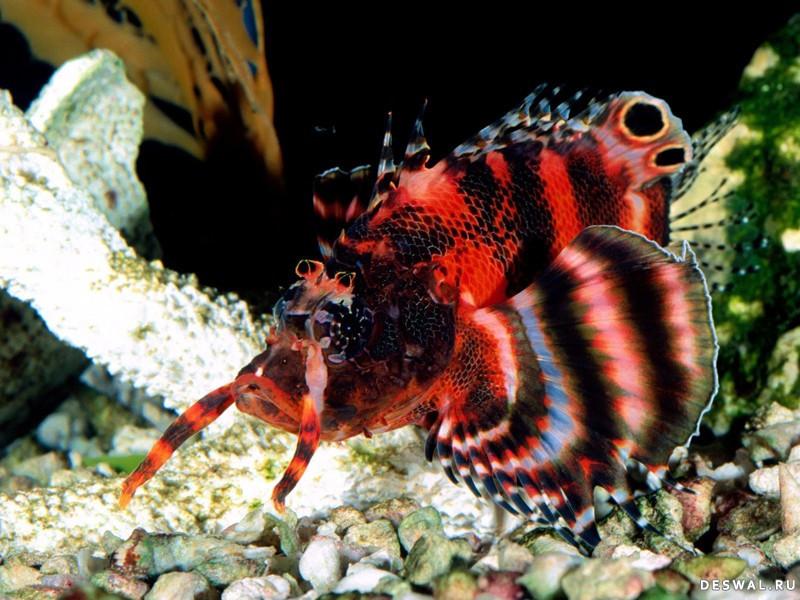 Фото 11. Нажмите на картинку с обоями подводного мира, чтобы просмотреть ее в реальном размере