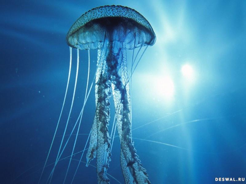 Фото 16. Нажмите на картинку с обоями подводного мира, чтобы просмотреть ее в реальном размере