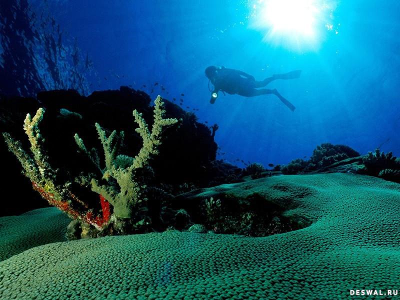 Фото 17. Нажмите на картинку с обоями подводного мира, чтобы просмотреть ее в реальном размере