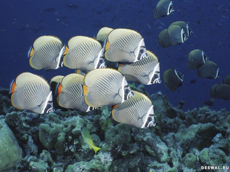 Фото 20. Нажмите на картинку с обоями подводного мира, чтобы просмотреть ее в реальном размере