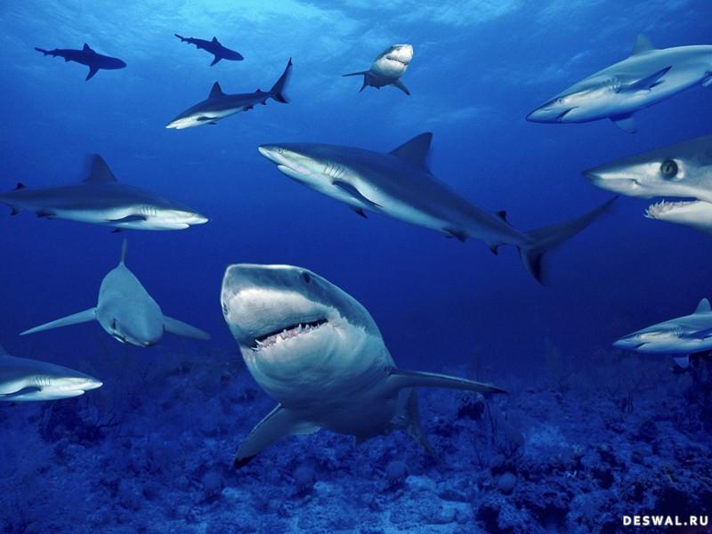 Фото 26. Нажмите на картинку с обоями подводного мира, чтобы просмотреть ее в реальном размере