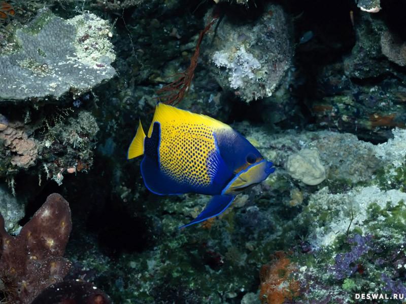 Фото 68. Нажмите на картинку с обоями подводного мира, чтобы просмотреть ее в реальном размере
