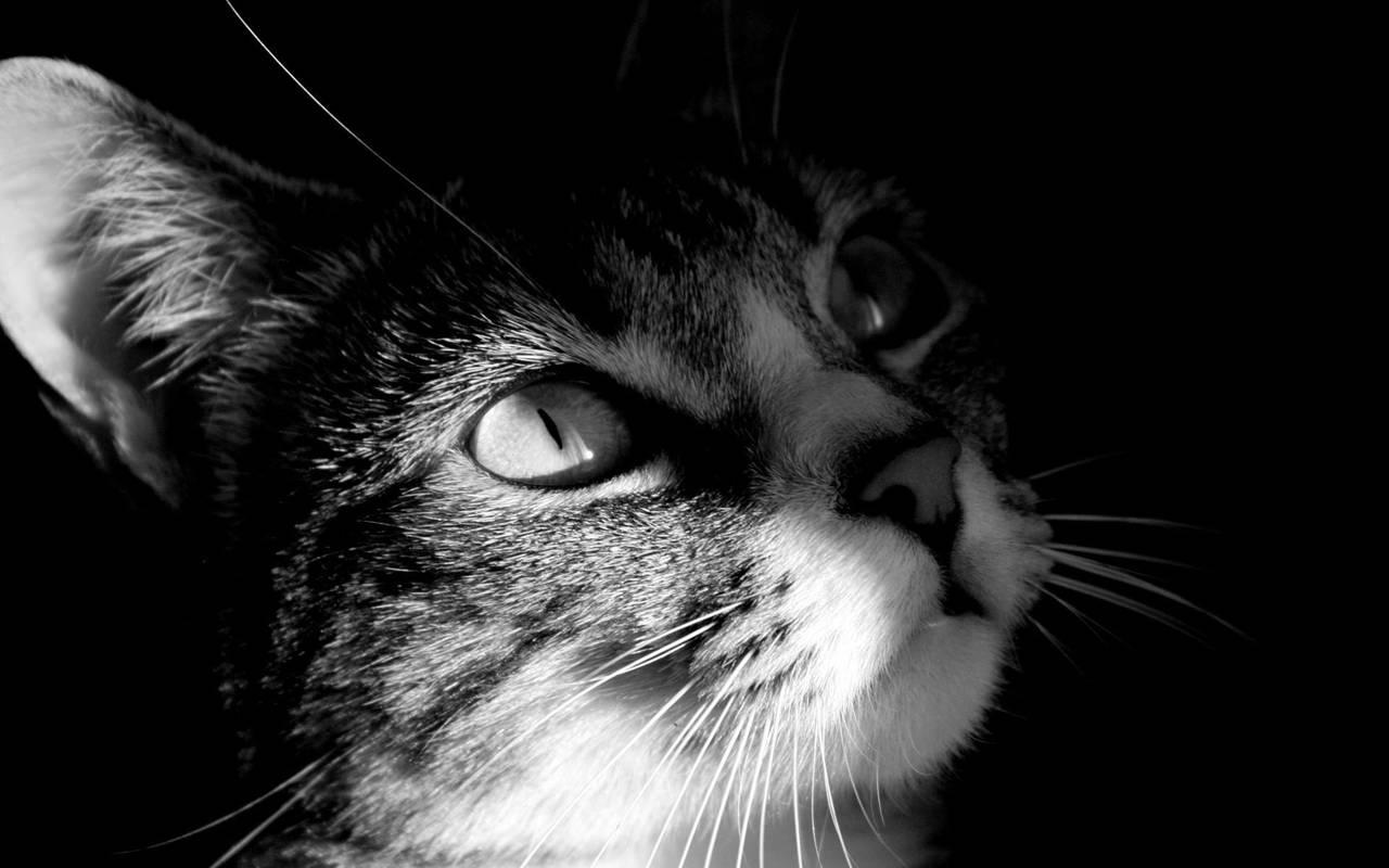 Кошка нажмите на картинку с