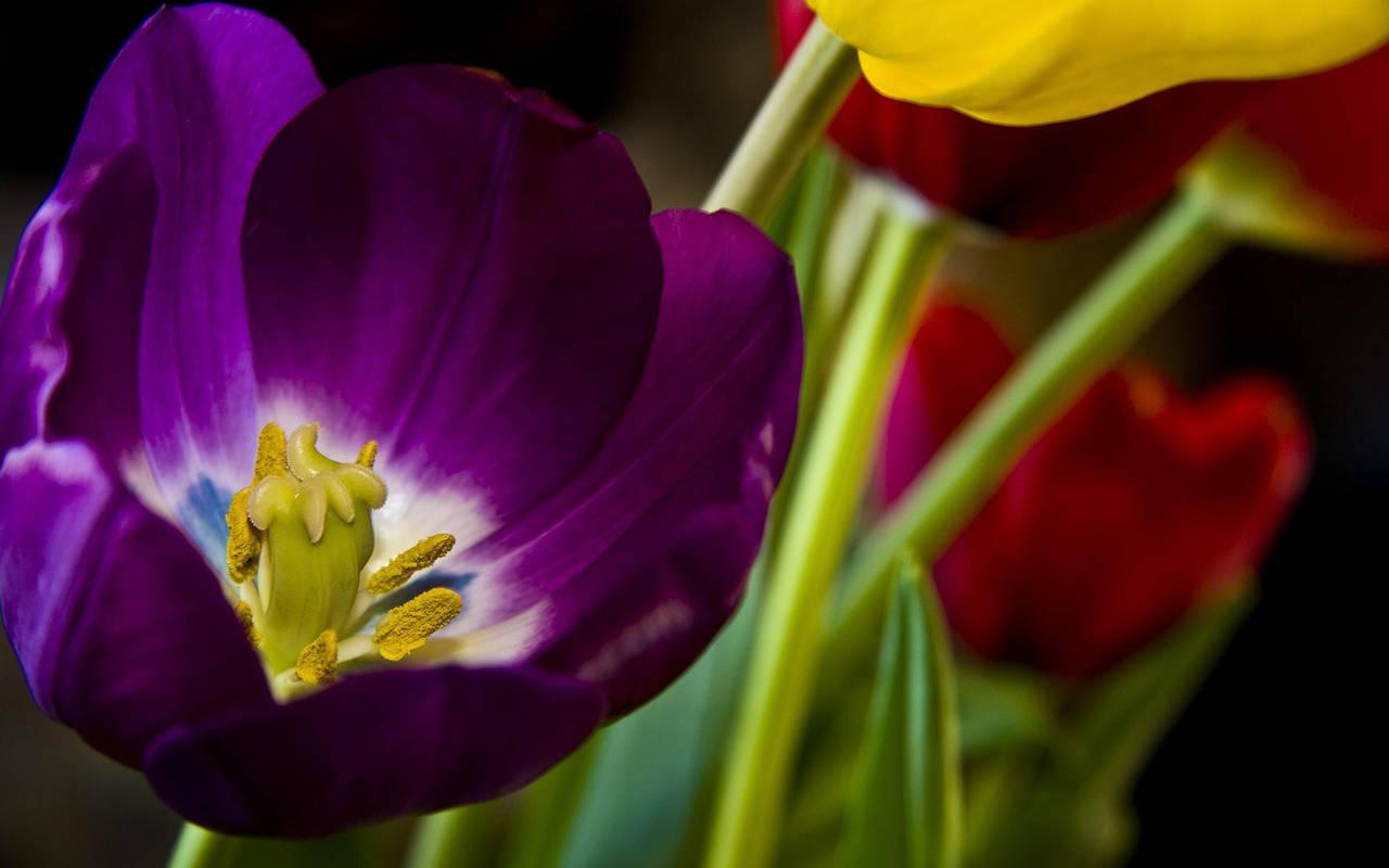 Красивые цветы нажмите на картинку с