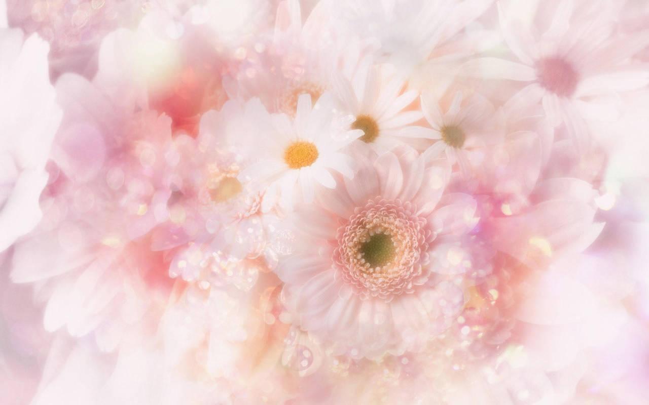 Белые цветы нажмите на картинку с