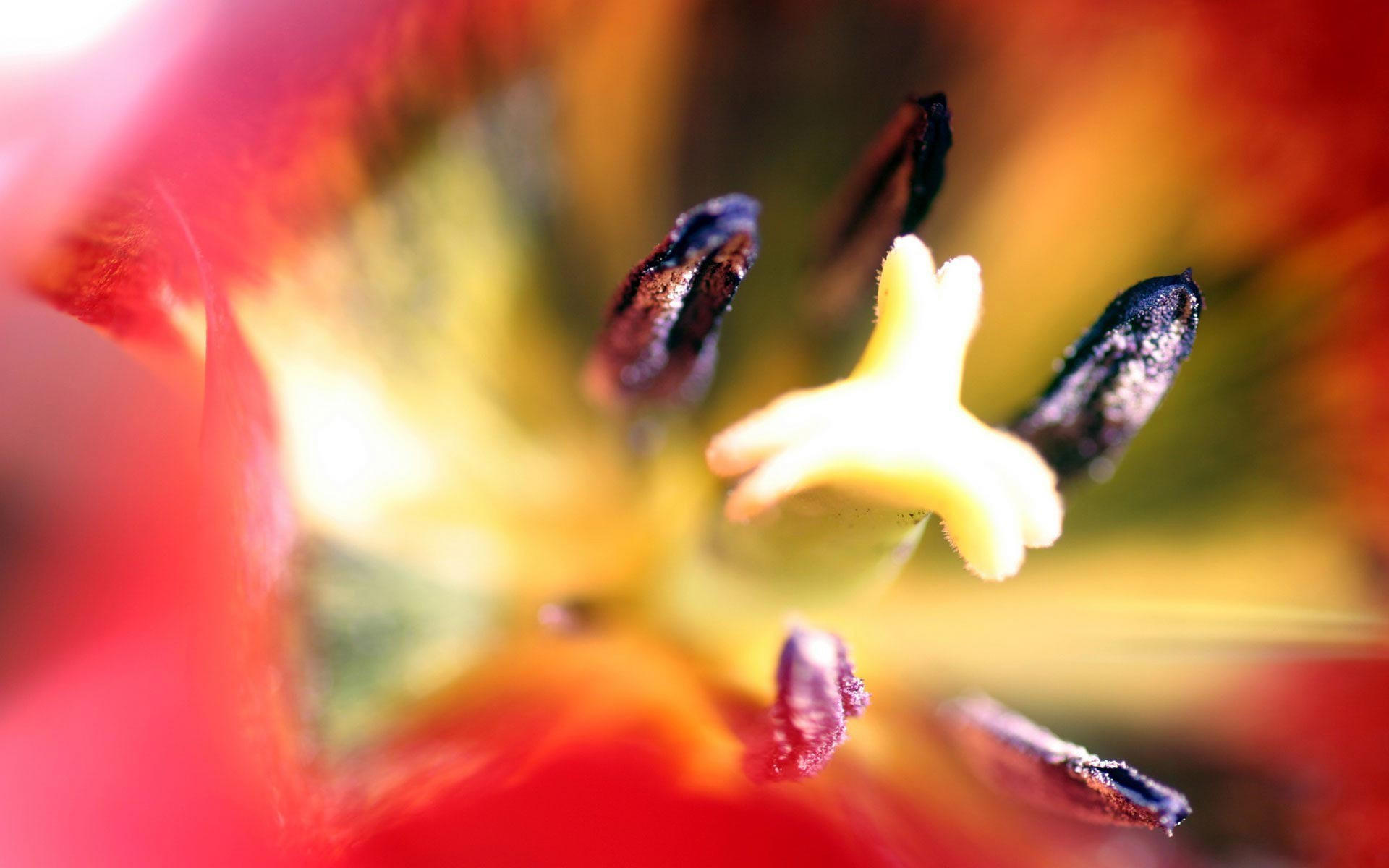 Пестики и тычинки