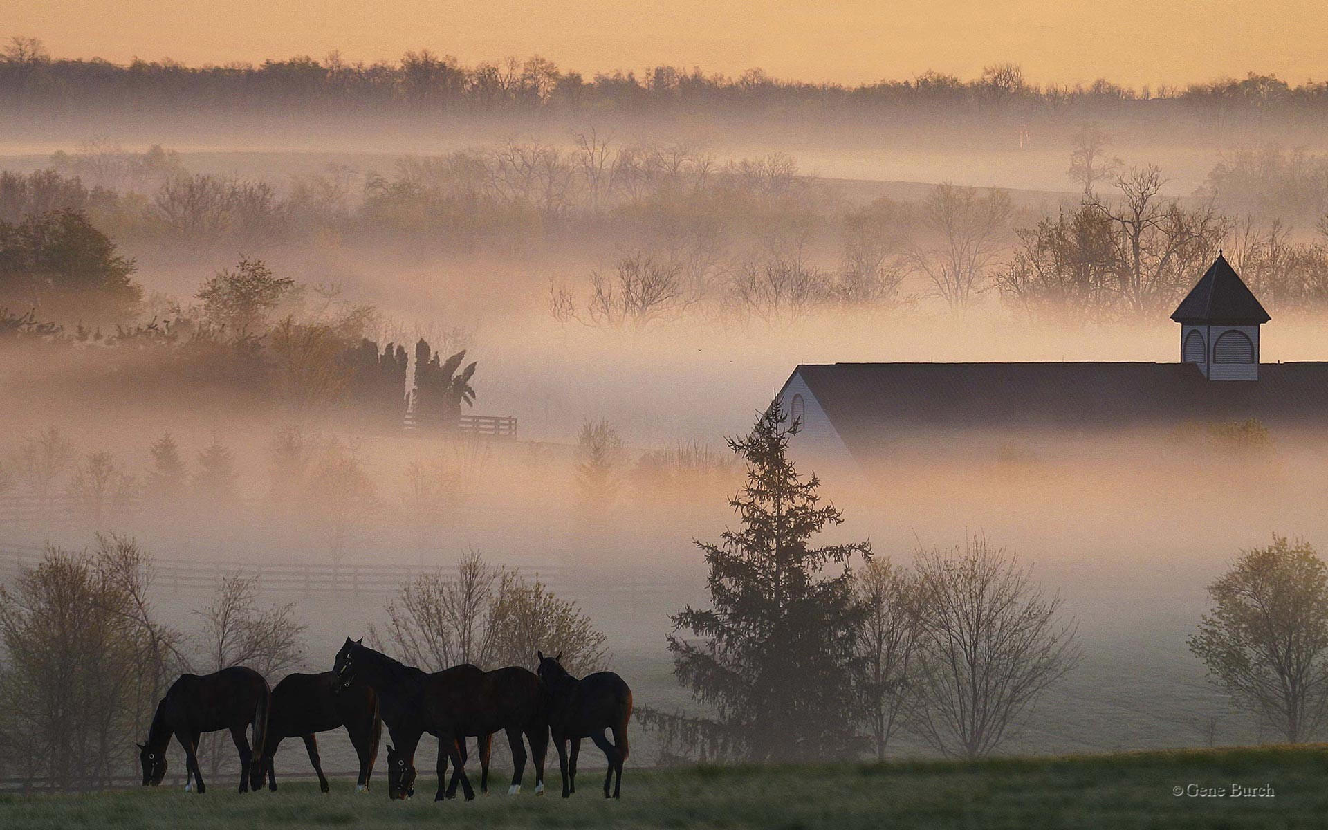 Лошади в тумане