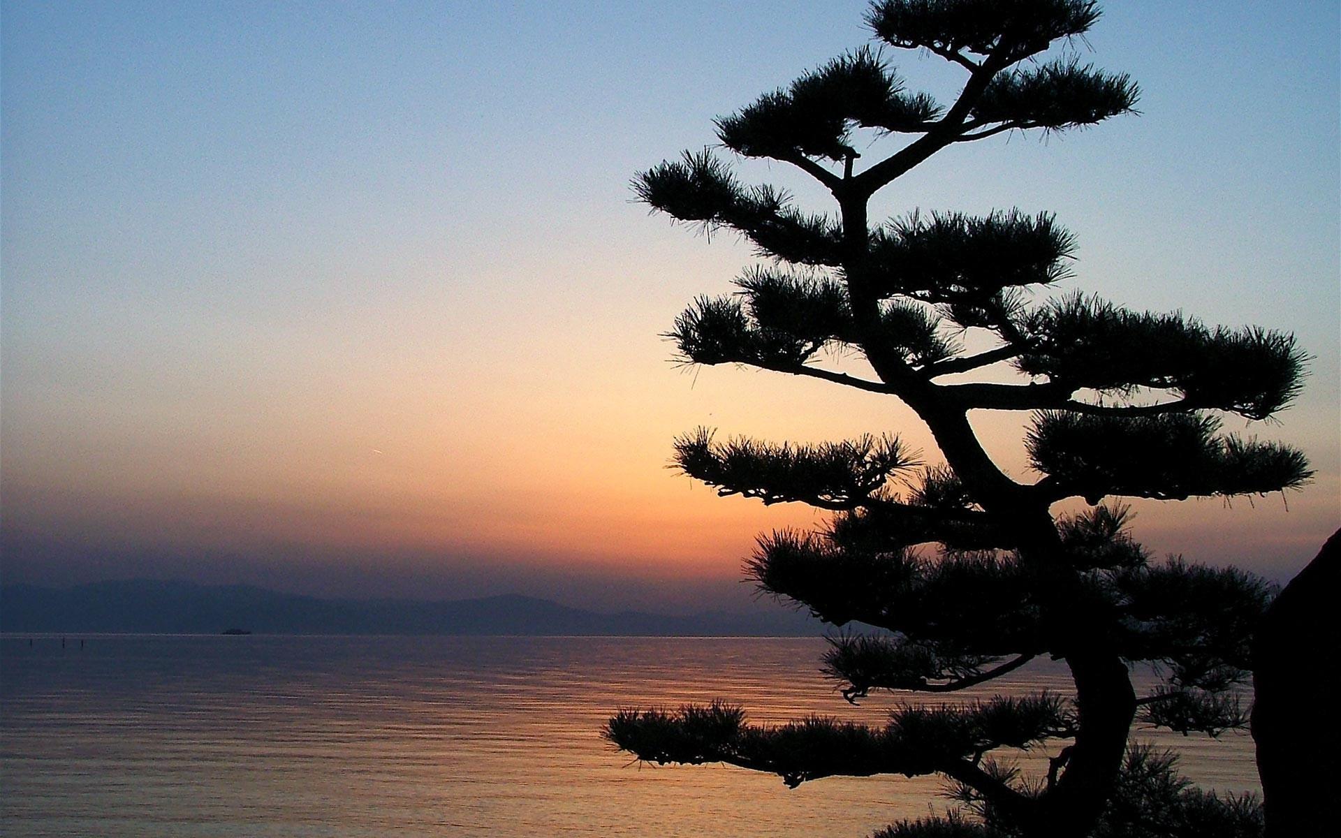Дерево и море