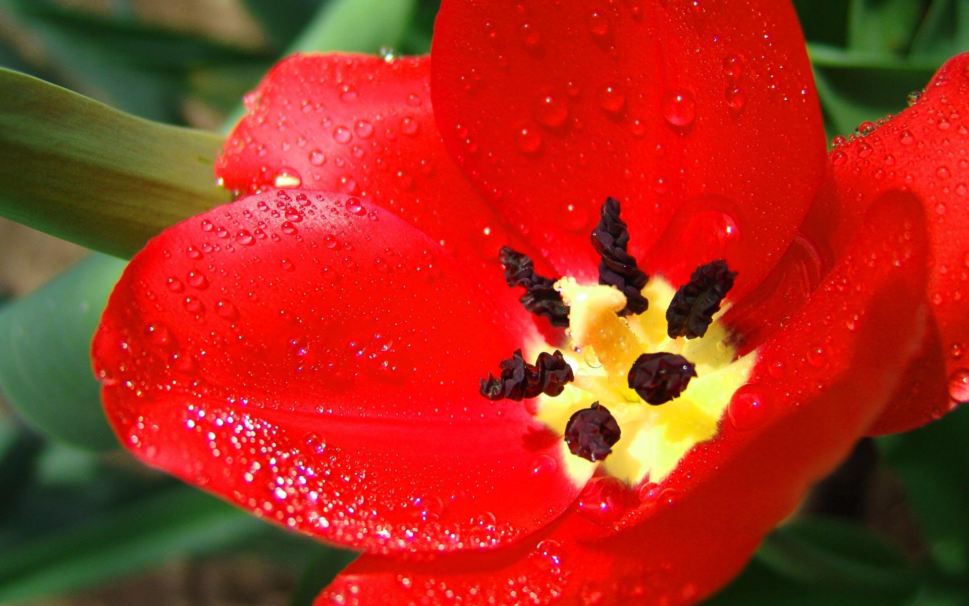 Мокрый цветок