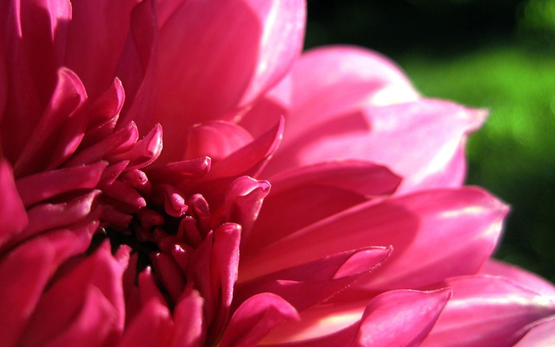 Цветок крупно