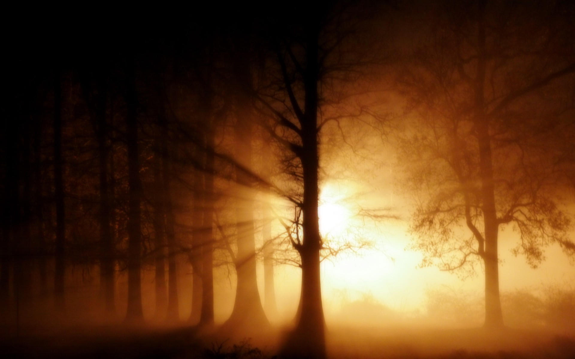Свет за деревом