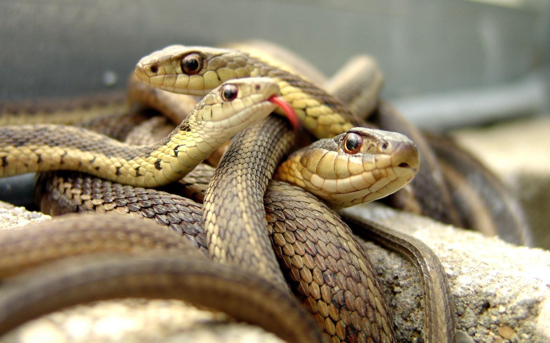 Логово змей
