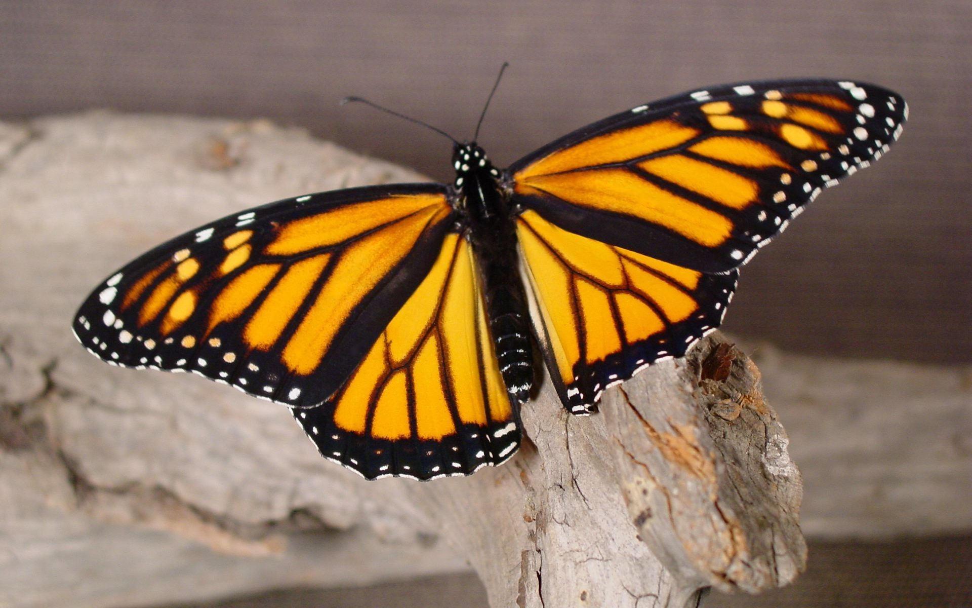 Бабочка на бревне