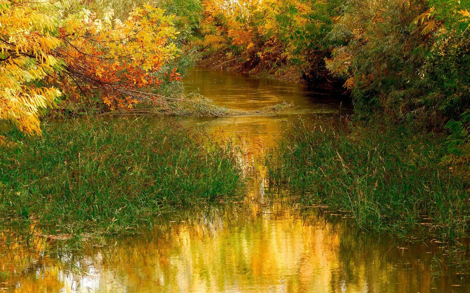 Заросшая речка
