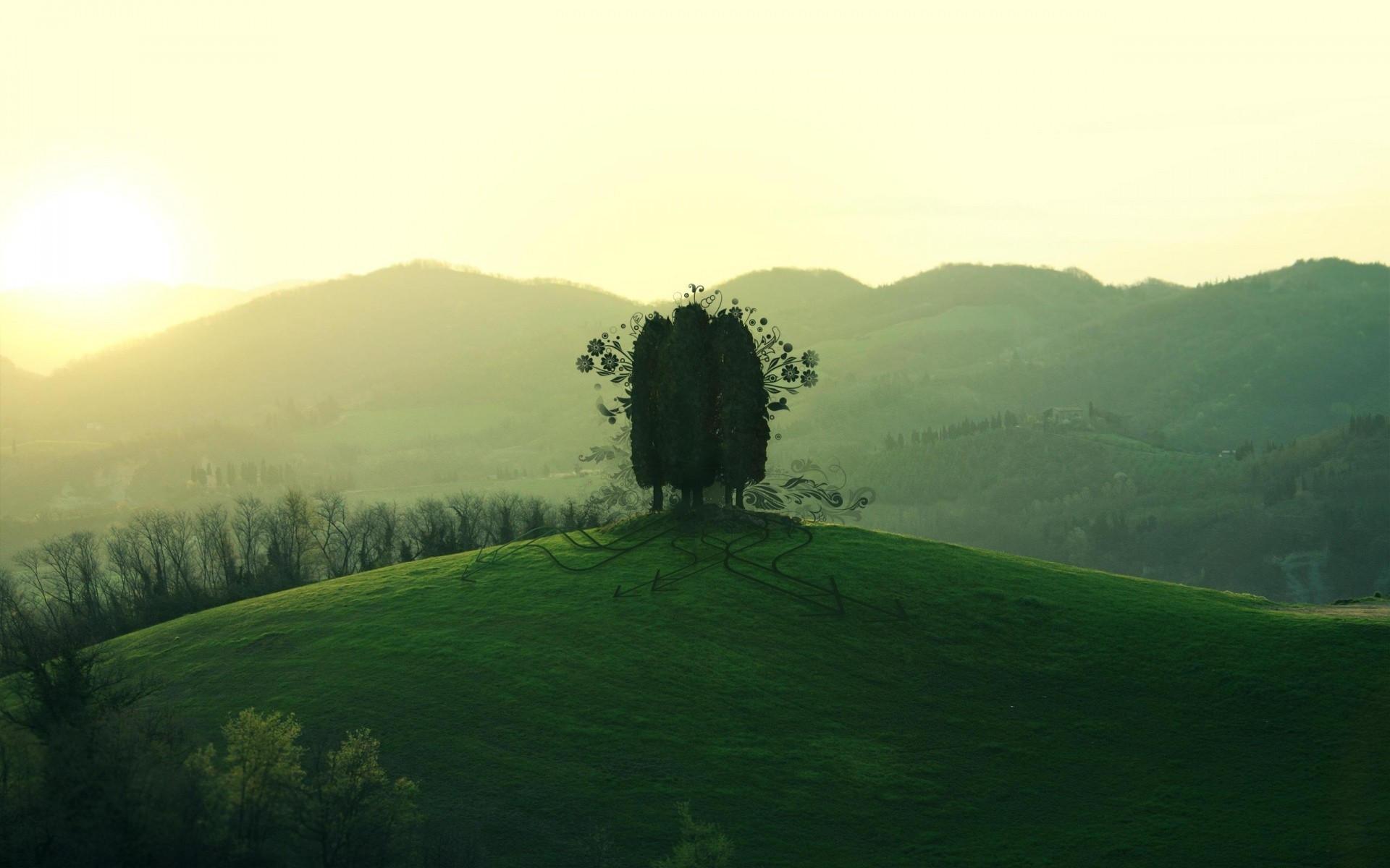 Дерево на холме