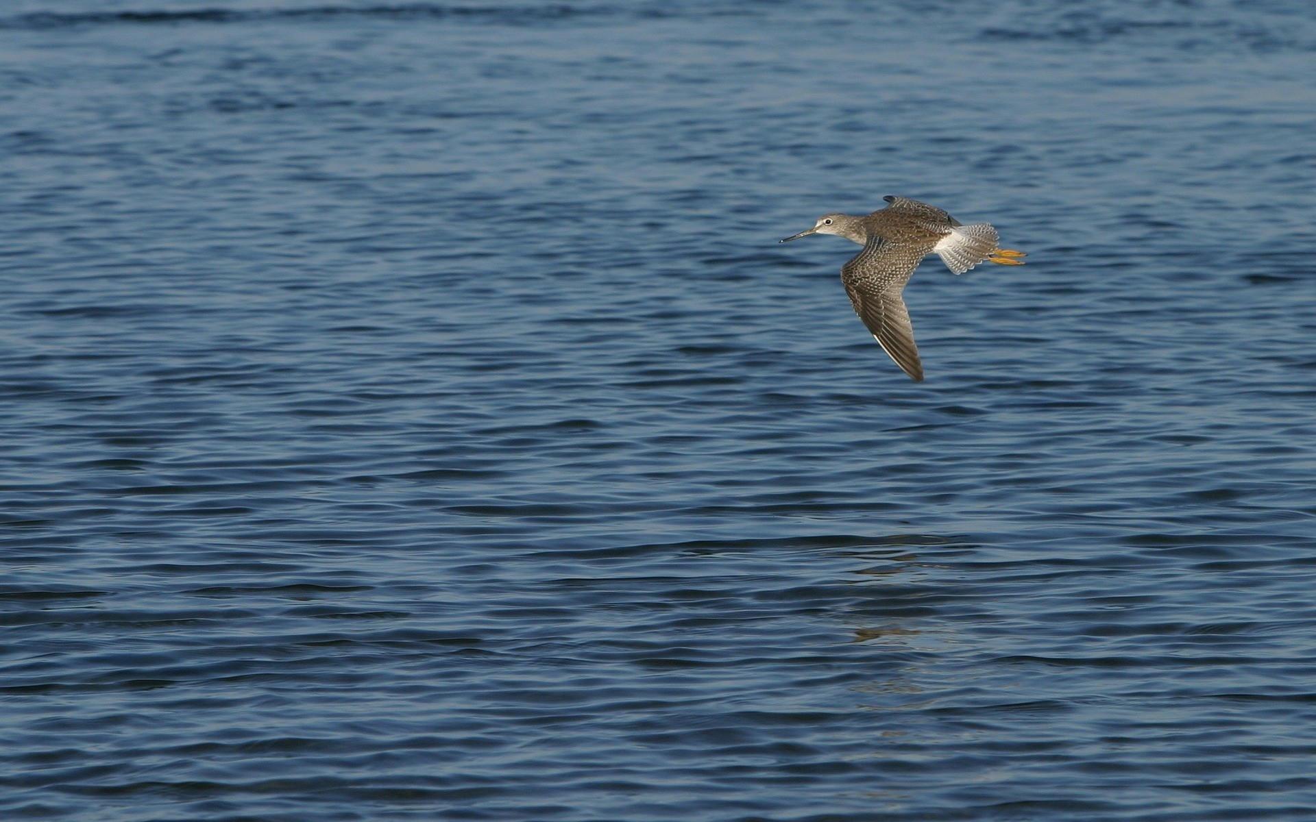 Птица над водой
