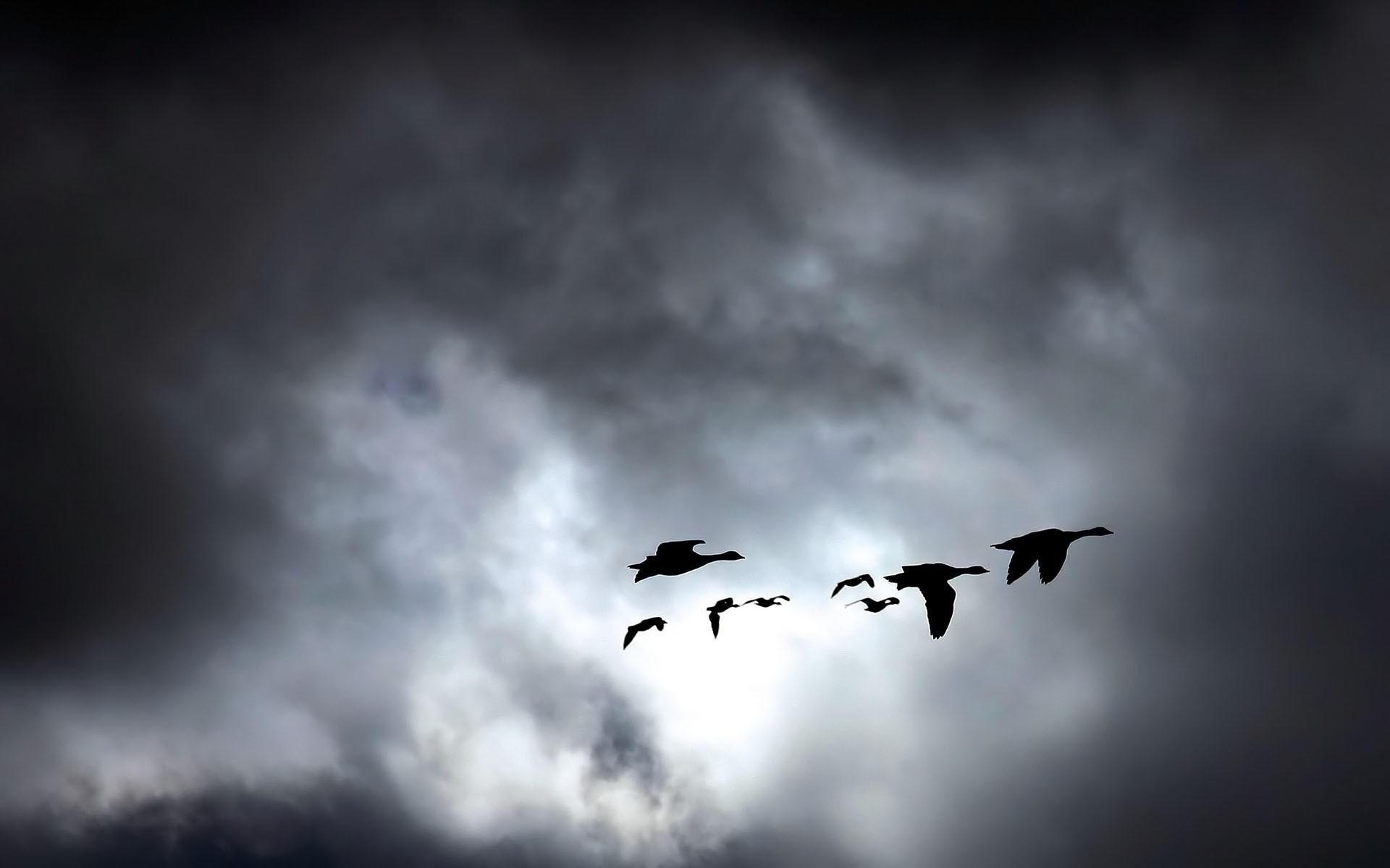 Косяк птиц