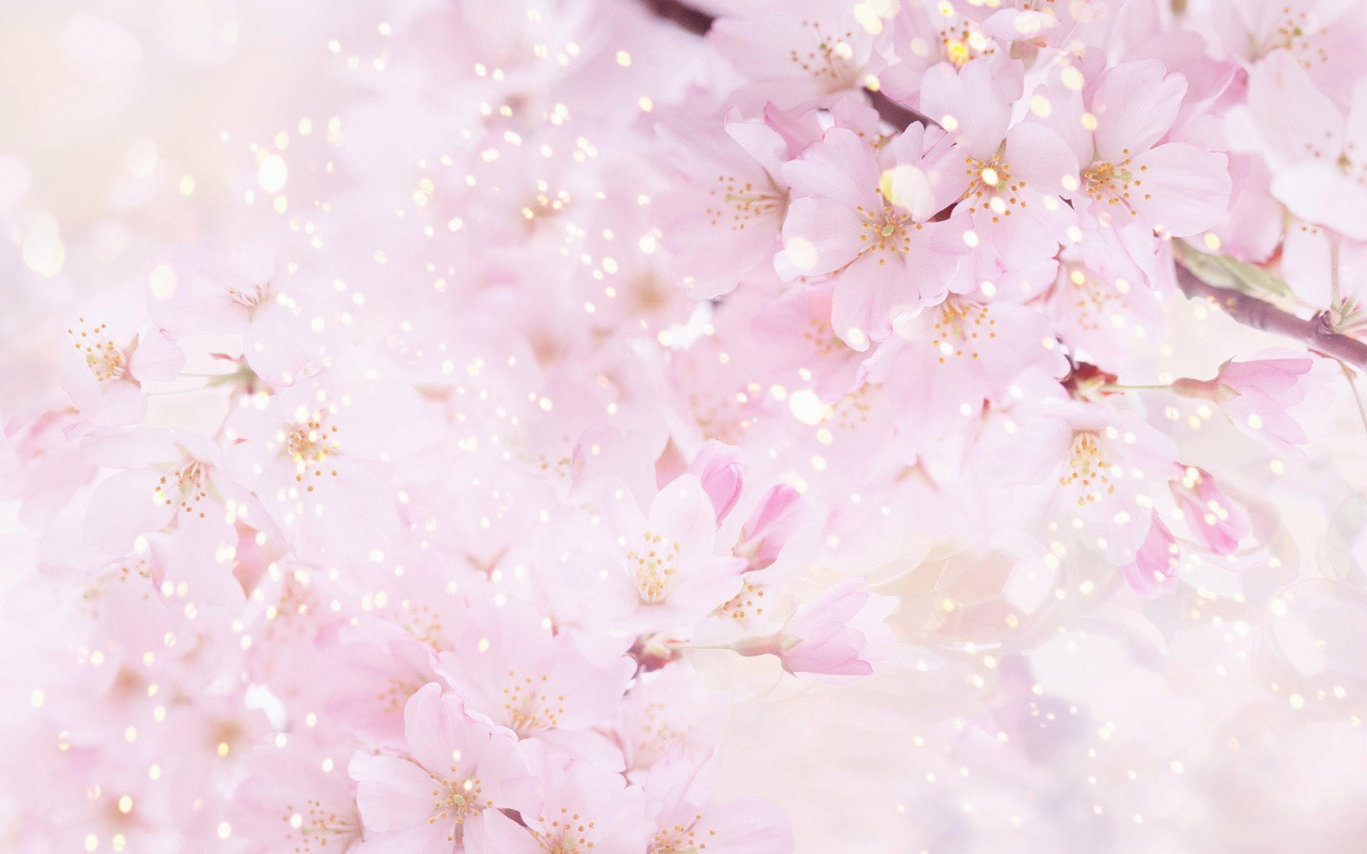 качественные фото цветов: