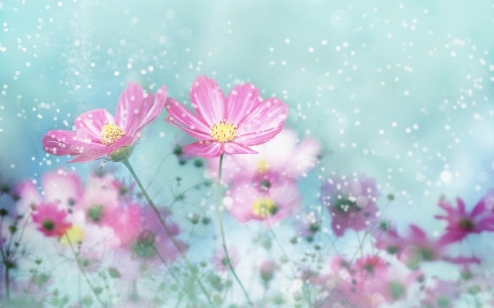 Снег и цветы