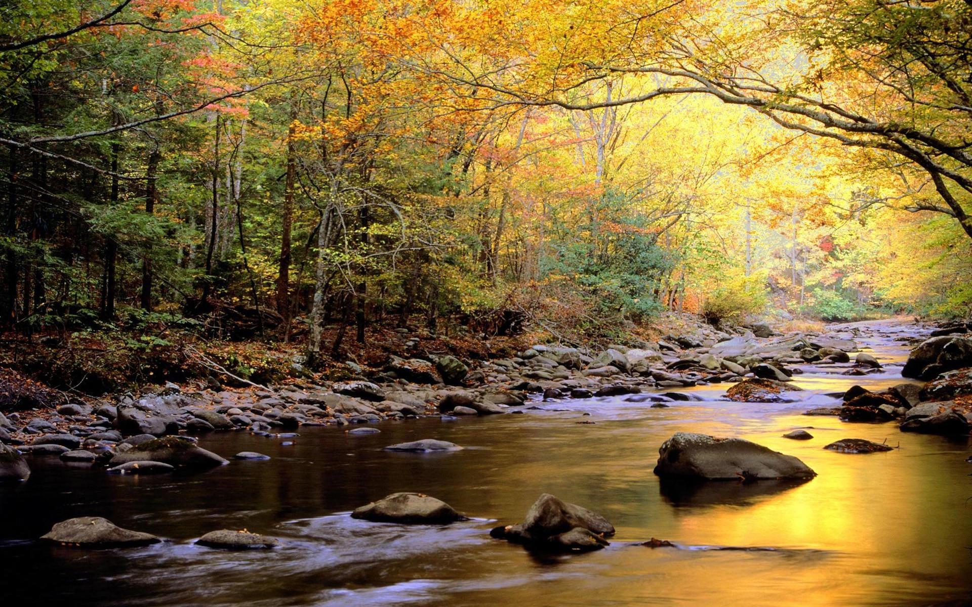 Тихая речка осенью