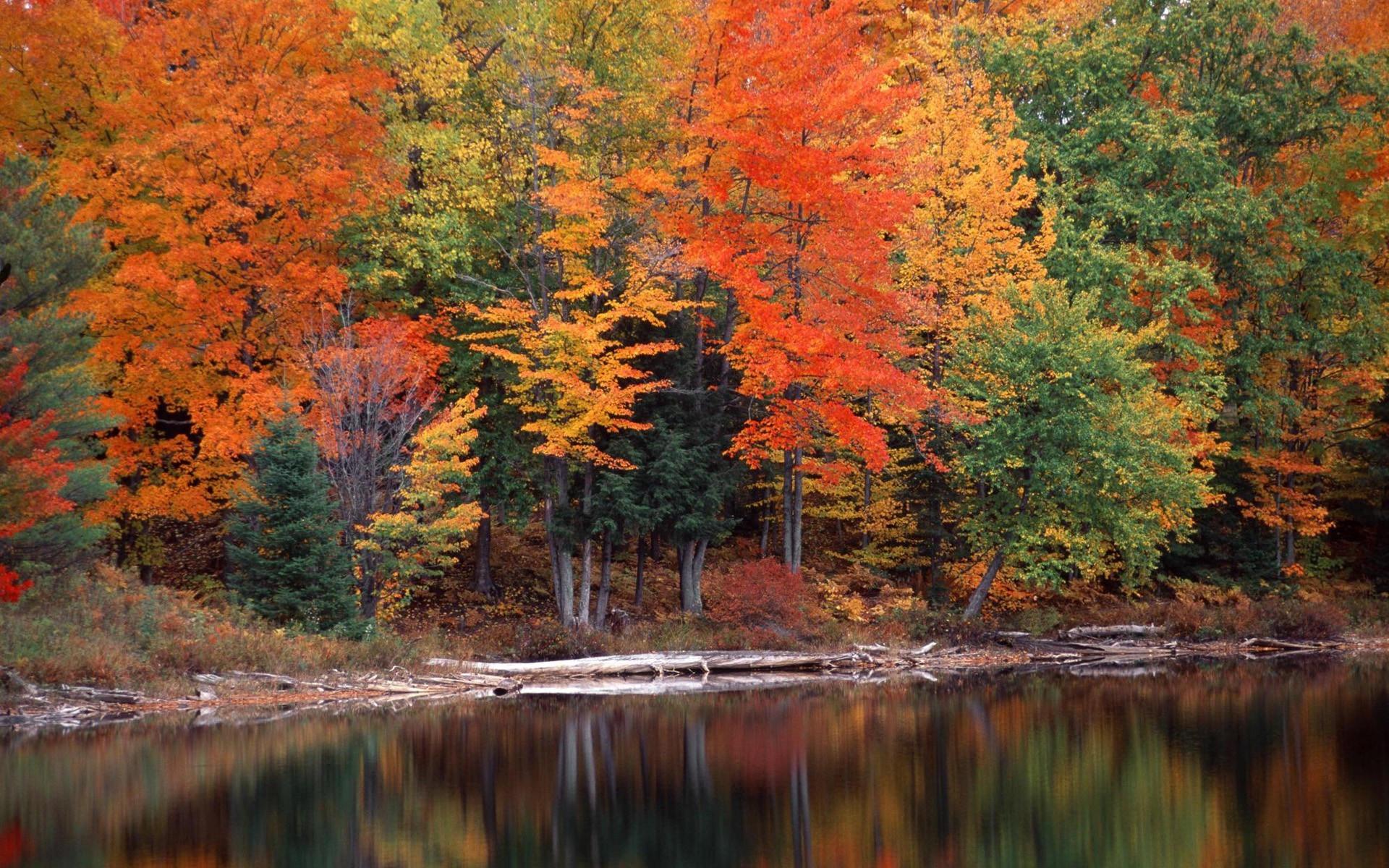 Тихая осень