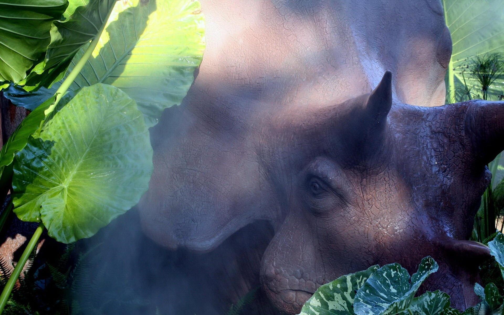 Серьезный носорог