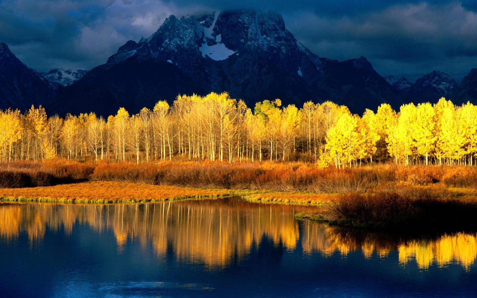 Желтые деревья под горами