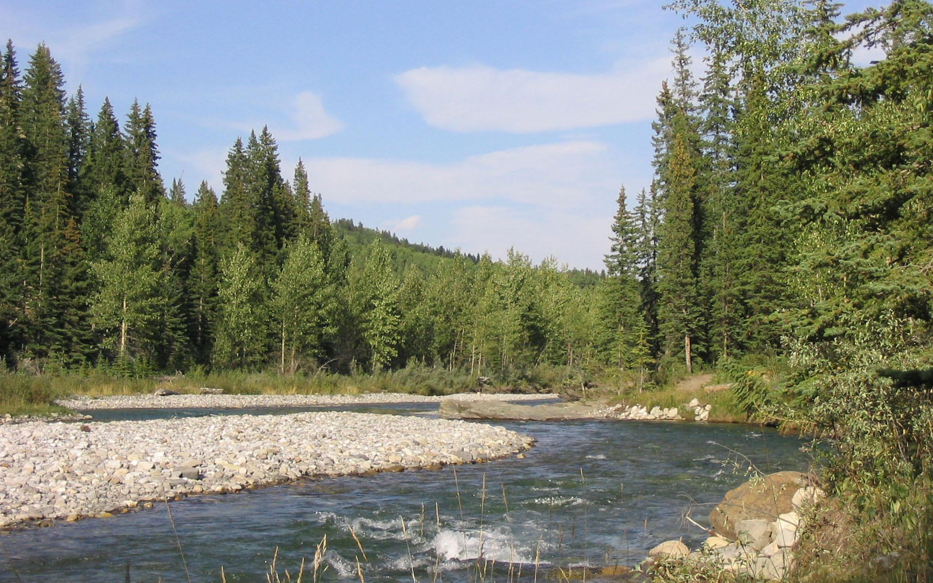 Летняя речка в лесу