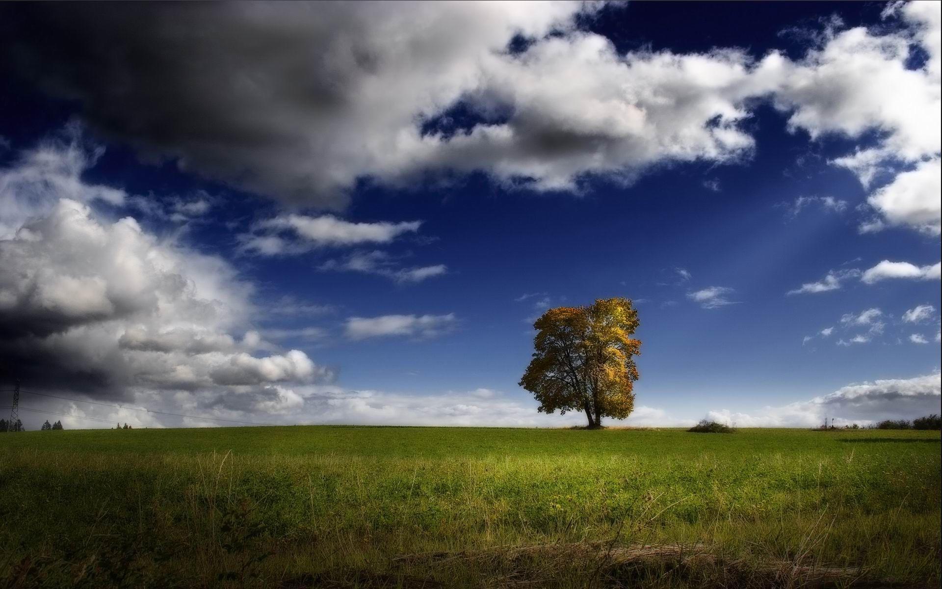 Дерево в зеленом поле