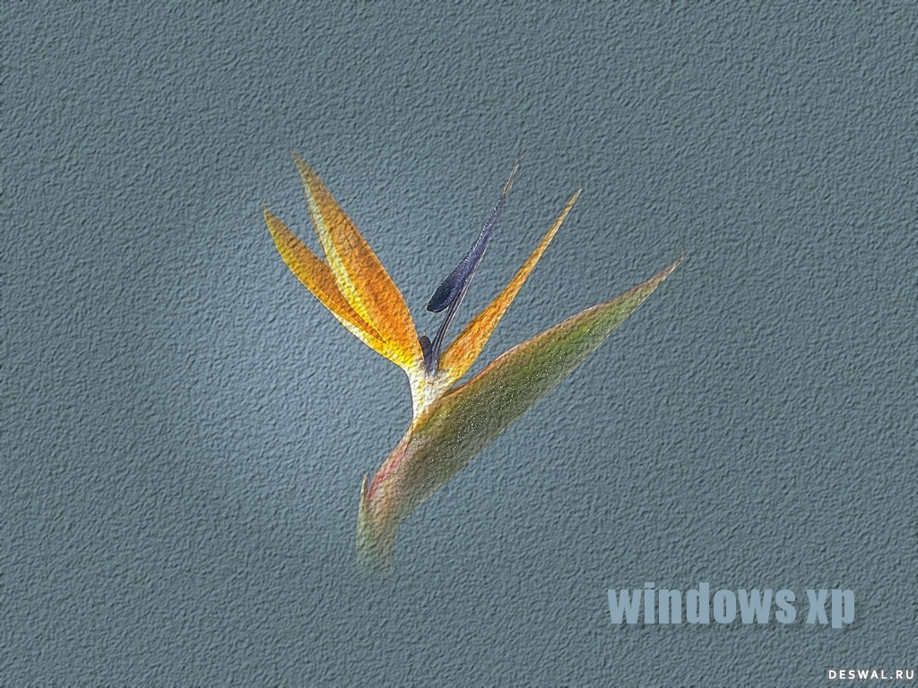 Фото 25. Нажмите на картинку с обоями windows, чтобы просмотреть ее в реальном размере
